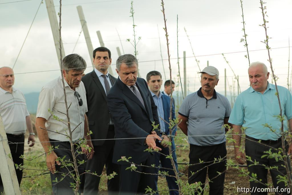 Итальянские яблони заплодоносят в Южной Осетии осенью